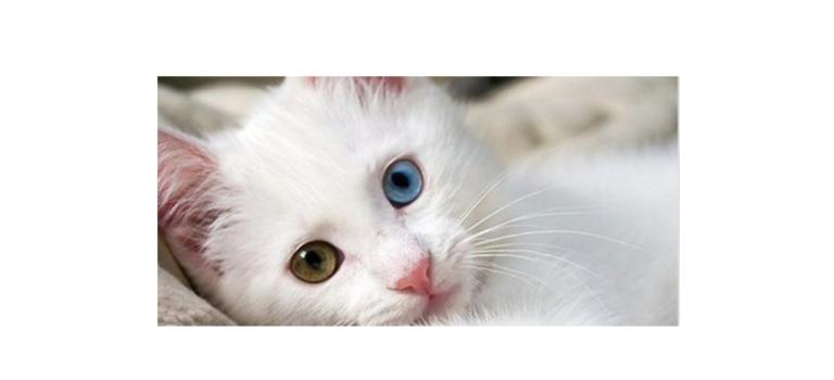 Ο γάτος